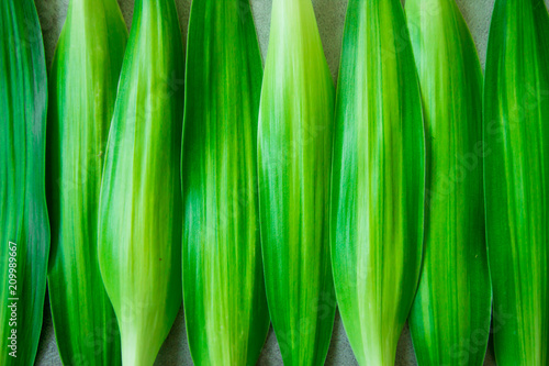 Green leaves lay together as a background image. Has space to put text. - 209989667