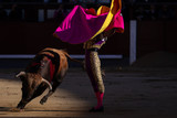 Evening of bulls in Spain - 210001253