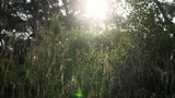 Slowly sliding across wild grasses on a forest floor with bright sunlight shining through at dawn - 210006600