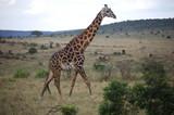 Kenya - 210009034