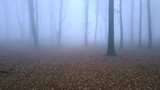 Walking in fairy tale foggy forest. Autumn rainy morning in the woods