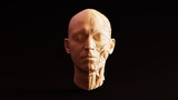 White Chocolate Clay Anatomical Ecorche Human Head 3d illustration - 210019025