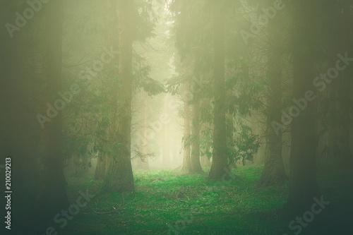 Fototapeta forest with beautiful sunlight