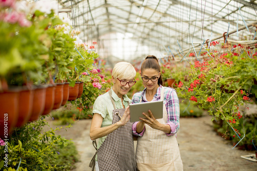 Two senior and young  florist women  selecting flowers while looking instructions from a tablet - 210047028