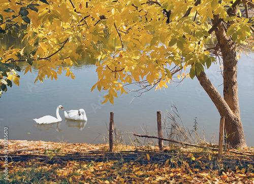 Fotobehang Honing Autumn landscape