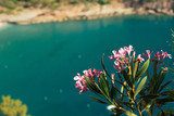 Beautiful pink flowers of oleander with turquoise sea in the background. Kabak Valley beach near Fethiye, Turkey. Paradise concept - 210058882