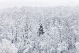 above view of snow covered trees in woods