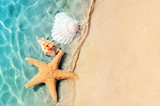 starfish and seashell on the summer beach in sea water.