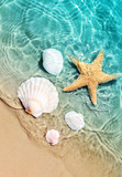 starfish and seashell on the summer beach in sea water. - 210075067