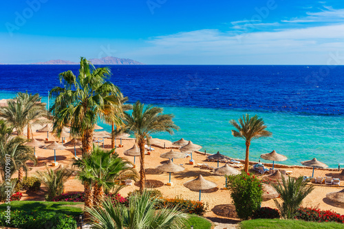 Leinwanddruck Bild Sunny resort beach with palm tree at the coast shore of Red Sea in Sharm el Sheikh, Sinai, Egypt, Asia in summer hot. Bright sunny light