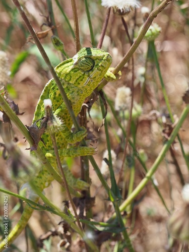 Aluminium Kameleon OLYMPUS DIGITAL CAMERA