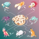 Exotic Pets Isometric Flowchart - 210112093