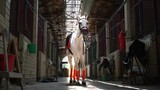 A beautiful white horse in check and with a saddle stands in the middle of the stables - 210117256