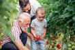 Grandfather,son and grandson in tomato plant at hothouse