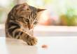 Leinwanddruck Bild - Beautiful feline cat at home. Domestic animal.