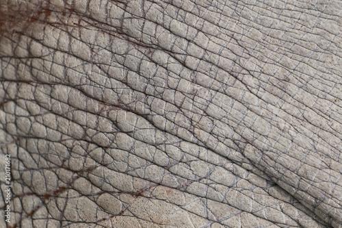 Fototapeta Surface of Elephant Leather skin background.