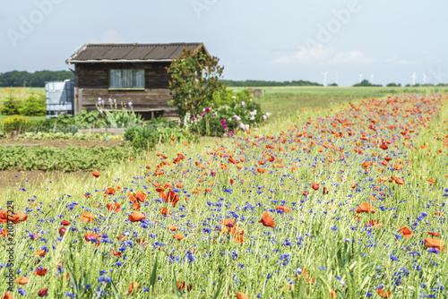 Blumenwiese Bienenwiese in der Eifel