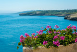 pots of geraniums on the sea - 210196218