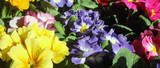 flowers - 210229284