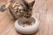 cat eats the food from the bowl