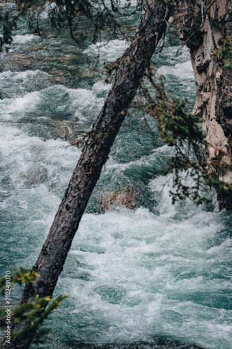Leaning tree over a rushing river - 210249070