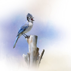 Blue Jay bird perched