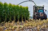 Maisernte, Maishäcksler in Aktion, Erntewagen mit Traktor - 210266235