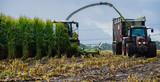 Maisernte, Maishäcksler in Aktion, Erntewagen mit Traktor - 210266243