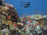 Three divers among fish. - 210270023