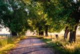 Mglisty poranek nad łąkami