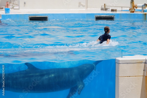 Fototapeta Dolphin in the sea
