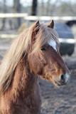 Orange horse portrait - 210315627