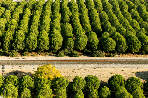 Fotobehang Pistache Pine forest aerial landscape with a railroad