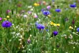 artenvielfalt  blumenwiese  insektennahrung