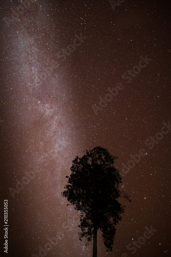Night sky of milky way with tree located north of thailand - 210355053