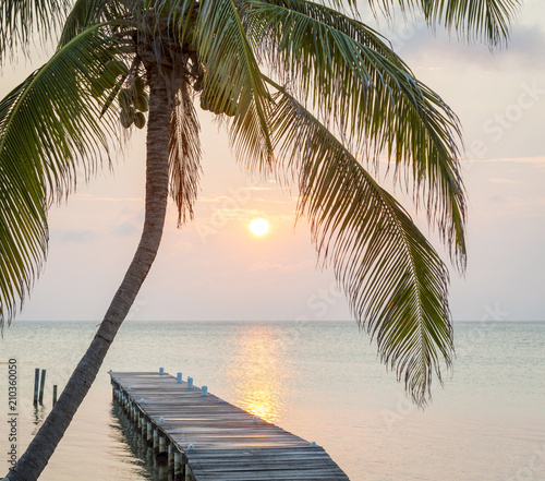Molo Tropical Sunrise