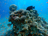 Coral reef in the Red Sea next to Eilat - 210376481