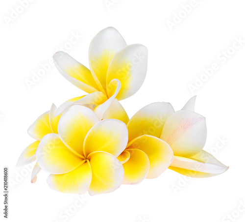 Fotobehang Plumeria Frangipani flower isolated on white background