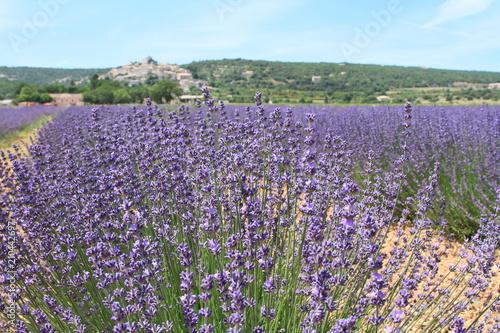 Fotobehang Lavendel paysage de Provence 2018/1