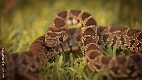 Fototapeta Serpiente