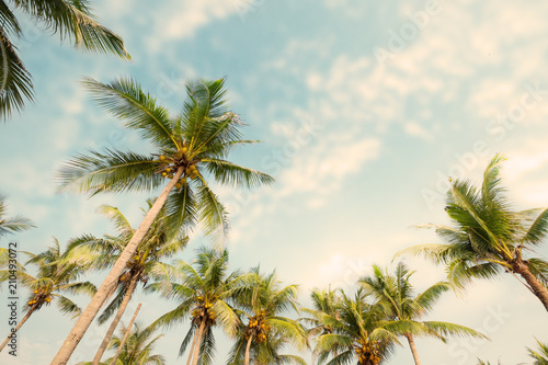 Palm tree on tropical beach with blue sky and sunlight in summer, uprisen angle. vintage instagram filter effect - 210493072