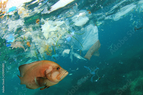 Fish and plastic pollution in sea. Microplastics contaminate seafood.    © Richard Carey