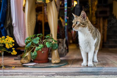 Fotobehang Kat A street cat in Istanbul