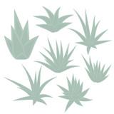 Aloe Vera, succulent plant, flower set isolated on white background. Vector illustration. - 210527416