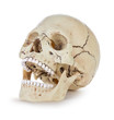 Leinwanddruck Bild - Human skull isolated on white background with clipping path.