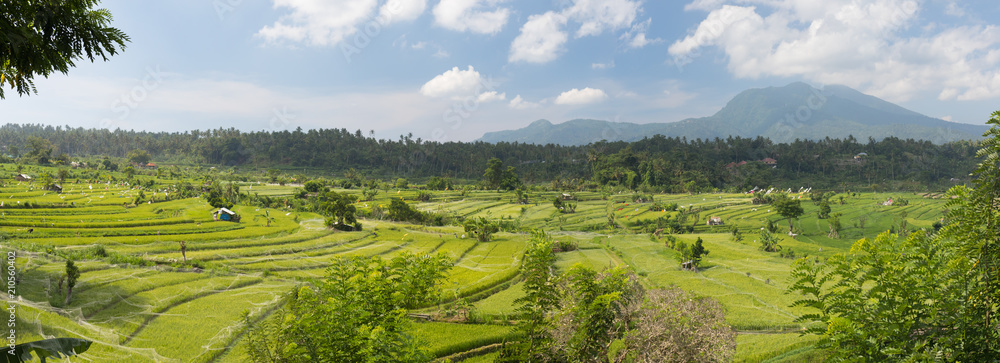 Panoramic view of the rice fields of the island of Bali