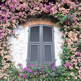 View of a characteristic green window enclosed with plants around with flowers of various colors. - 210567265