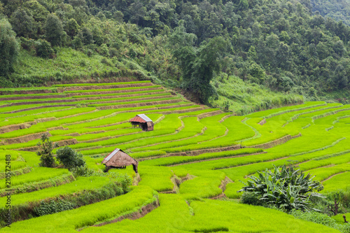 Fotobehang Lime groen Green of rice terrace located on hill of mountain view located at Vietnam
