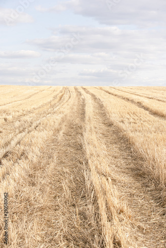 Aluminium Lente Yellow spring field of agricultural plants