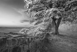 Beautiful black and white landscape image of Sycamore Gap at Hadrian's Wall in Northumberland at sunset with fantastic late Spring light - 210580829